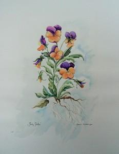 Jolly Joker', bloemen