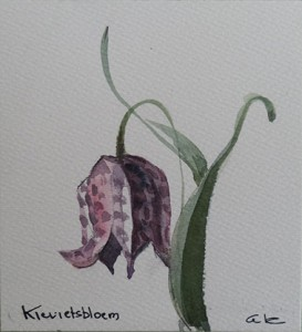 Kievitsbloem