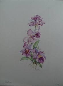 Bloemstudie Orchidee