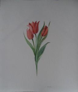 Drie rode tulpen