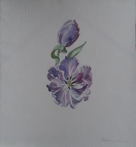 Paars-blauwe tulp
