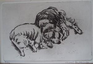 Florence en Goldie (Hond en Kat)