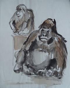 Gorilla (dierentuin Wassenaar)