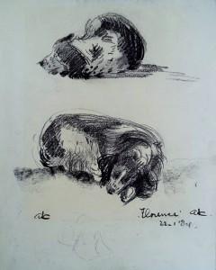 Florence (de hond)