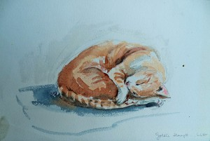 Goldie slaapt…