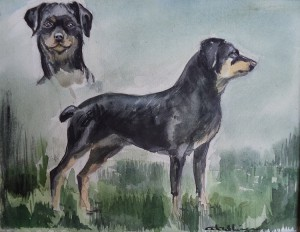 Hond (Rottweilier / Hovawart), staand en frontaal