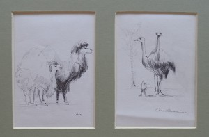 Dromedarissen en struisvogels