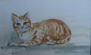 Goldie (de kat)
