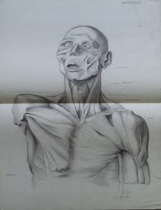 Anatomische tekening mensentorso
