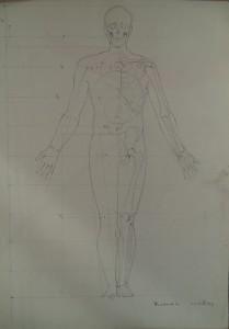Anatomische proportie