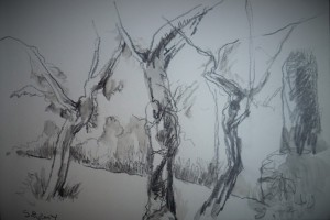 Bos bij Saint Remy