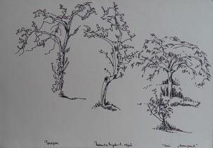 Appel- en Perenboom, tuin Huis te Manpad