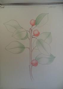 Oud tekenboek met tekeningen in kleurpotlood van verschillende objecten, zoals insignes, tassen, en studies naar planten en bloemen